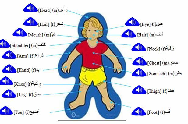 Pics Photos - Arabic Worksheet Body Parts